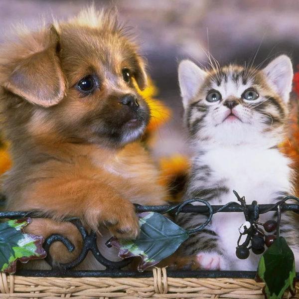 Щенок или котенок