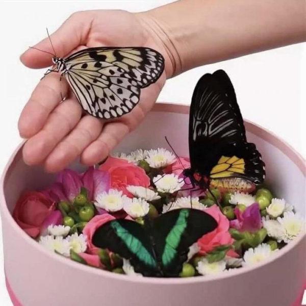 Коробочка с бабочками